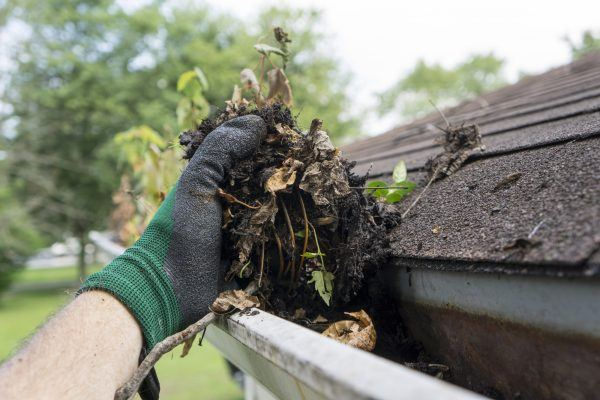 Indianapolis Gutter Cleaning, Carmel Gutter Cleaning, Westfield Gutter Cleaning, Fishers Gutter Cleaning, Zionsville Gutter Cleaning, New Pal Gutter Cleaning, McCordsville Gutter Cleaning, Greenwood Gutter Cleaning, Noblesville Gutter Cleaning, Fortville Gutter Cleaning, Beech Grove Gutter Cleaning, Greenfield Gutter Cleaning, Whiteland Gutter Cleaning, Whitestown Gutter Cleaning, Avon Gutter Cleaning, Bargersville Gutter Cleaning, Franklin Gutter Cleaning, Mooresville Gutter Cleaning, Maxwell Gutter Cleaning, Fountain Town Gutter Cleaning, Danville Gutter Cleaning, Maxwell Gutter Cleaning, Lapel Gutter Cleaning, Cicero Gutter Cleaning, Camby Gutter Cleaning, Clayton Gutter Cleaning, Lizton Gutter Cleaning, Ingalls Gutter Cleaning,